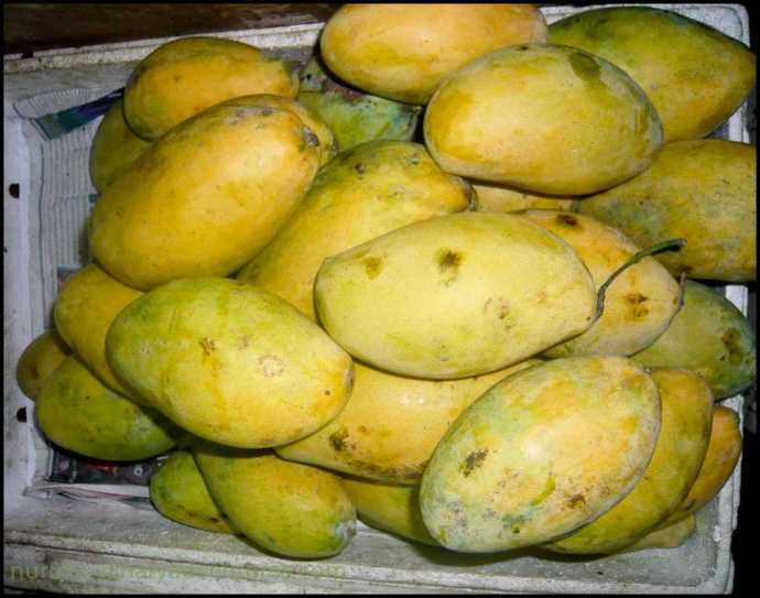 mangoes cambodia thailand