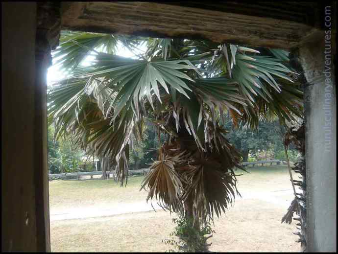 palm tree angkor wat