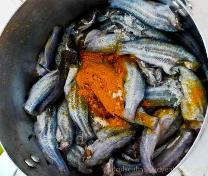 tengra mas, small bengali fish in turmeric powder