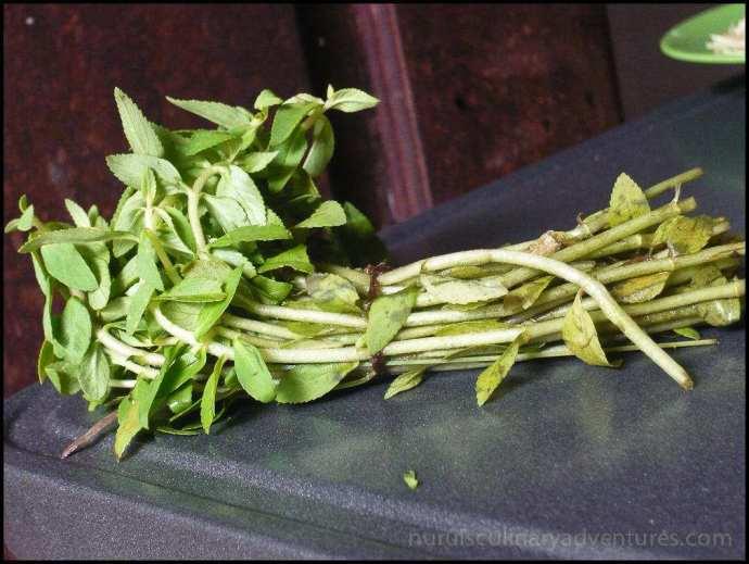 ma'om, ma-om, maom, cambodian herb